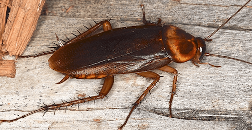 How to Keep Roaches out of Your Home