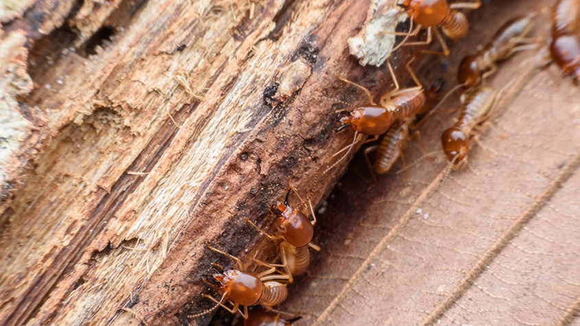 Termites Could End Up Costing You!