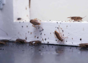Maintenance Tips for Rental Property Pest Control